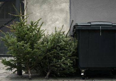 Ide tegye a hulladékká vált fenyőfát