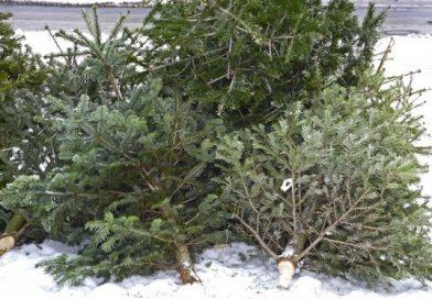 Fenyőfa lerakóhelyek Sopron 2017